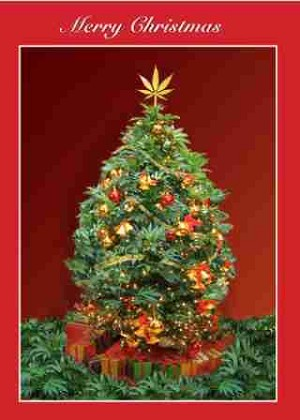 Merry Christmas This Buds For You Card